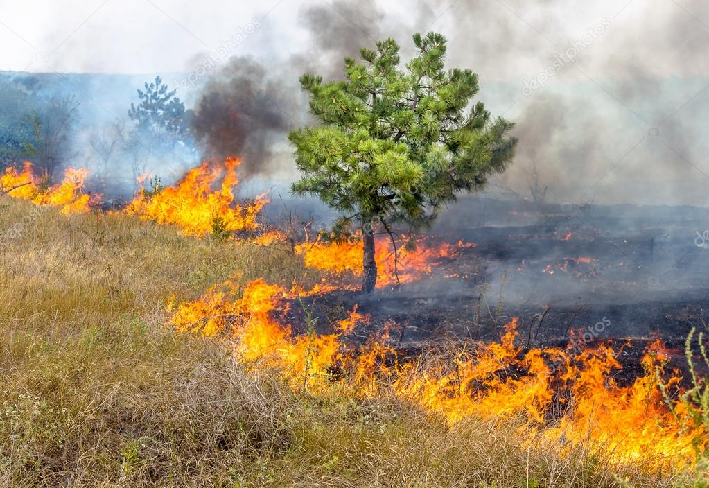 depositphotos_48123941-stock-photo-severe-drought-forest-fires-in
